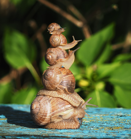 babosa: Snails one over othe like pyramide