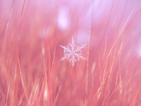 Snowflake beautifull on the colorful background macro