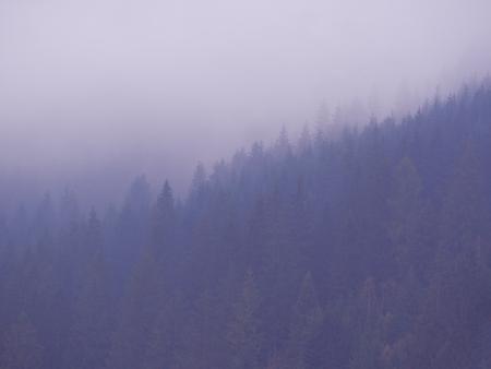 Carpatian mountains at the fog