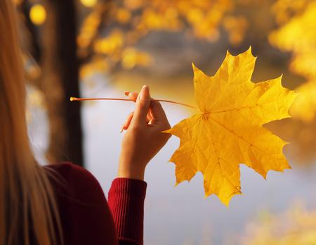 Girl keeping the maple leaf close-up Banco de Imagens