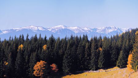 Yellow autumn forest at the snow mountains