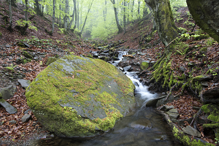 In the damp forest lies a large boulder on the path of a mountainous rushing river. Carpathians. Ukraine