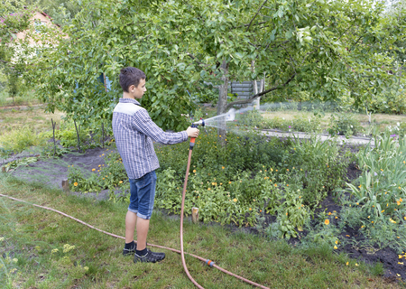A young man irrigates a flower bed in a garden from a water sprayer.