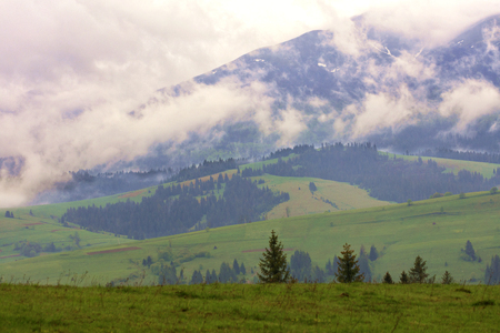The torn clouds of morning fog slowly descend along the slopes of the Carpathian Mountains into the forest green valleys in the early spring morning.