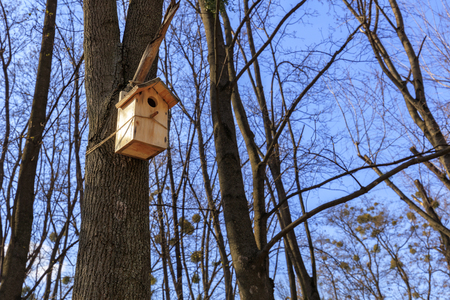 Wooden new nesting box is attached on a tree in the spring in the forest against the blue sky in the suns rays.