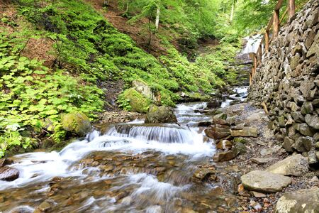 Daytime soft light in the forest illuminates the clear water of a mountain river in a cascading waterfall in the Carpathians, dangling everything around with morning freshness.