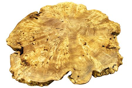 Beautiful rays on a cross section of a tree trunk on the root system, isolated on a white background.