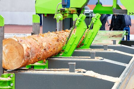 Large pine logs are automatically fed and processed in a modern automatic sawmill, receiving boards of a given size.