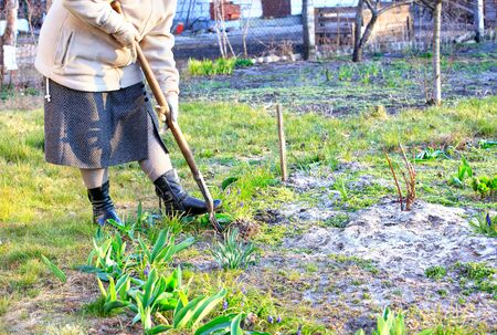 Using a hoe, farmer weeds a flower bed with his own hands and removes weeds from the soil in the garden on a clear spring day.