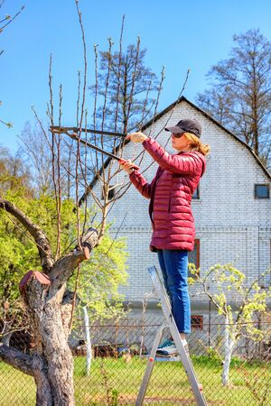 The gardener, squatting down, irrigates the rose bush under the root system of the plant with a sprinkler of water on a clear sunny spring day.