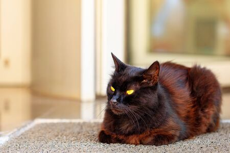 A brown cat with chocolate-fur color is resting on the porch of the house, spreading its ears, with narrowed pupils in bright yellow eyes.