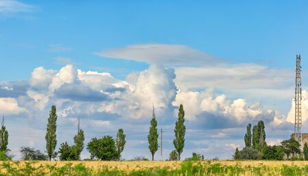 Lush white-gray clouds are beautifully located in the blue sky above the wheat field in the blur of a yellow field, lonely poplars on the horizon and the communication tower I edge the frame.