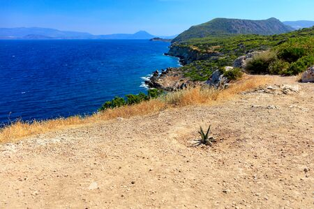 A prickly cactus  grown on a rocky soil road amid a   on the coast  the Gulf  Corinth,   copy space. Banco de Imagens