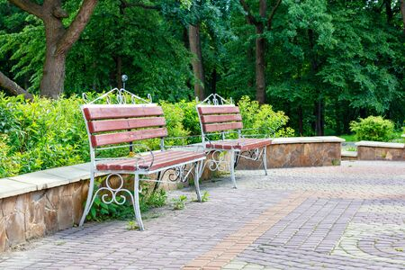 Wooden benches with metal frames stand at the edge of the old park on a cobblestone-paved area framed by green cut bushes under soft sunlight.