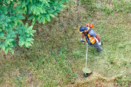 A worker in protective clothing using a petrol trimmer in a circular motion mows tall green grass near an acacia tree. Copy space, top view. Standard-Bild