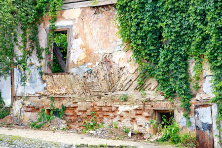 The rickety wall of an abandoned dilapidated old house with cracked stucco and broken windows was overgrown with wild grapes.