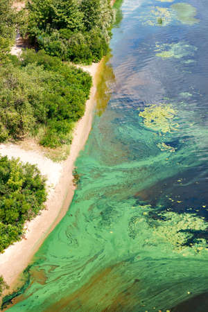 Blue-green algae cover the surface of the flowering water river with a film along the coast. River water pollution. Environmental problems. Standard-Bild