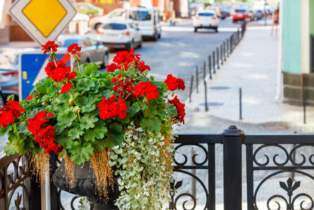 A vase of bright red geraniums adorns the building's front balcony against a blurred city street, selective focus, text space. 免版税图像