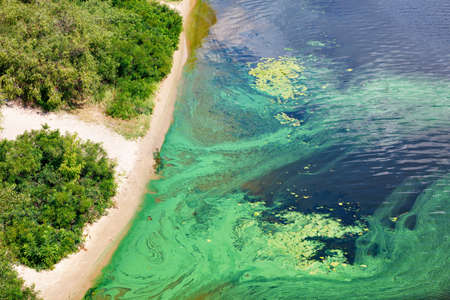 Blue-green algae cover the surface of the flowering water river with a film along the coast. River water pollution. Environmental problems. Copy space.