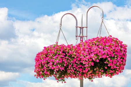Outdoor flowerpots with pink and red petunias hang from a metal white pole against a blue cloudy sky, copy space.