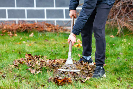 The gardener's hands take care of the green lawn, raking fallen leaves from the green grass with a metal rake in the autumn garden against the background of the house in a blurred form. Copy space, selective focus.