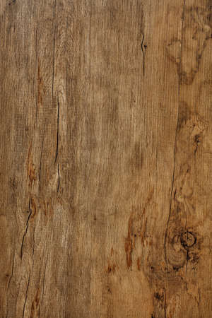 Beautiful pattern of old oak wood fibers with cracks, spots, weathered texture.
