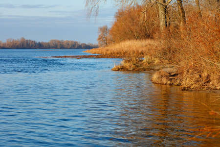 The bank of the Dnipro River with bare autumn bushes without leaves and brown dry thickets of reeds in the water is illuminated by the rays of the autumn sun.