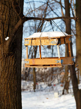 A bird feeder made from leftover building materials hangs on a tree branch in a winter forest against a blurred background of bush and sunlight.