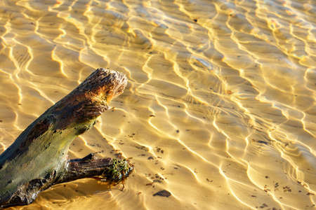 A wet driftwood of an old tree lies in the sandy shallow water against the background of transparent water and sun glare on the ripples, copy space. 免版税图像
