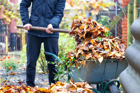 The gardener tends the garden and collects the fallen leaves to a garden wheelbarrow on a bright day. Copy space, selective focus.