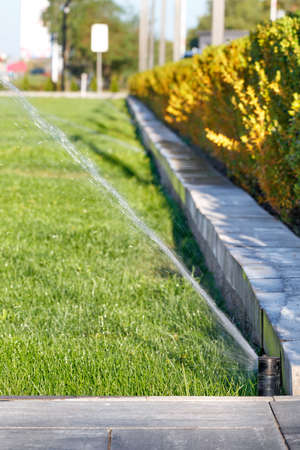 Watering, spraying water using an automatic sprinkler system over a green lawn. Selective focus, subtle background blur. Vertical image, copy space. 免版税图像