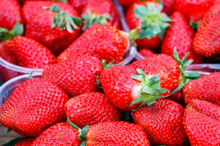 Appetizing and beautiful berry of ripe large red strawberries. Focus in foreground, background in blur, copy space.