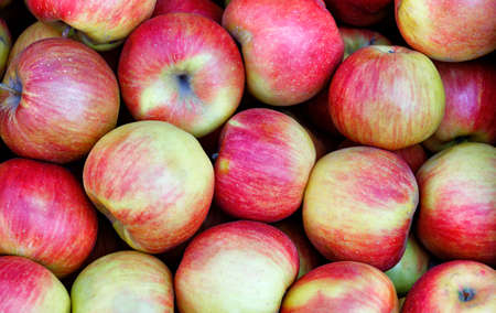 Background and texture of ripe red-yellow striped apples, unwashed, freshly picked, neatly arranged, close-up. Stock Photo