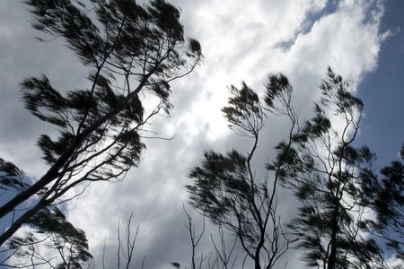 agitation: Wind in trees