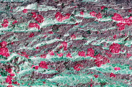 inversion: abstract background tree bark color inversion photos Stock Photo