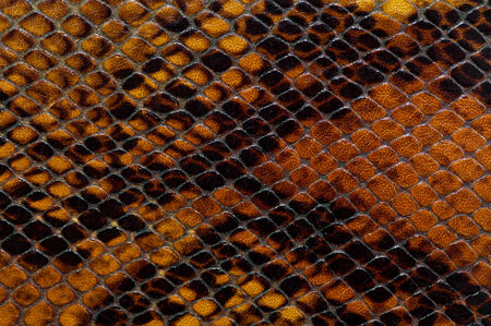 reptile skin photo