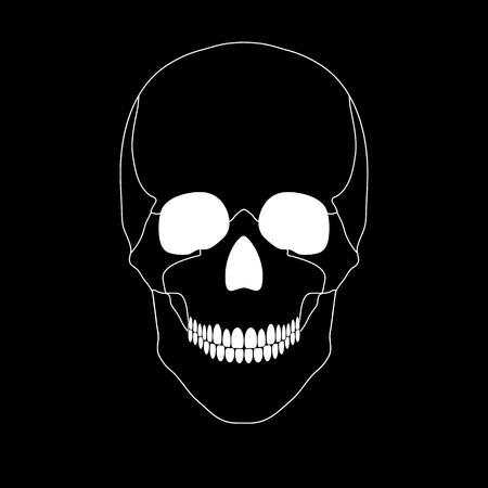 Vector illustration of a white skull on a black background Vector