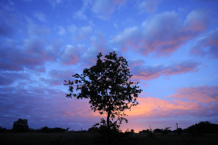 Tree silhouette on starry sky. Beautiful natural background.