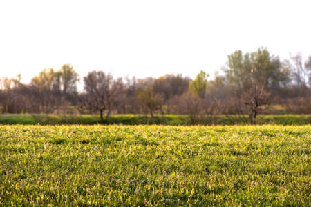 Beautiful green meadow with trees. Soft focus.