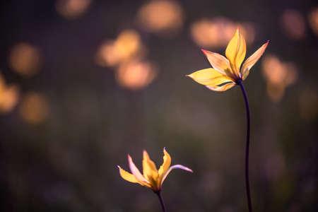 Flowers at sunset. Soft focus.