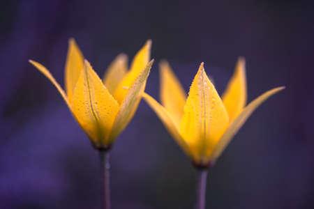 Beautiful flowers close-up on dark background. Soft focus.