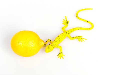 fauna: Yellow lizard near yellow lemon, matching colors, flora and fauna in one color Stock Photo