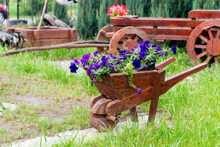 Wooden decorative flower bed truck serves for flowering petunia. Design solution for the design of flower beds.