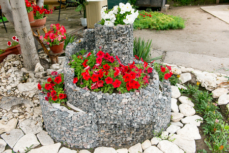 petunias: A flower bed of blooming petunias for the stones. Design solution for the design of flower beds. Stock Photo
