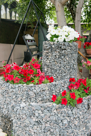 A flower bed of blooming petunias for the stones. Design solution for the design of flower beds. Stock Photo