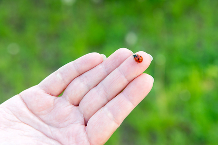 Ladybird on a female hand. In unity with nature. Palmistry. Guessing on the arm. Hygiene and hand care.