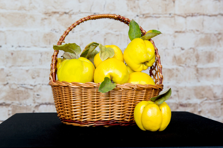 quinces: Bunch of juicy yellow quinces fruits. Quince. Basket with delicious juicy quince. Vintage quince late autumn. Stock Photo