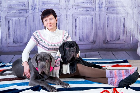 Attractive girl posing in the studio with puppies of breed Mastiff Neapolitana. Stock Photo
