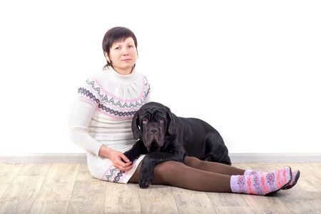 Attractive girl posing in the studio with puppies of breed Mastiff Neapolitana. Stock Photo