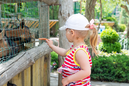 A child, a little girl, feeds a goat through an iron cage in the zoo. In unity with nature. Stock Photo